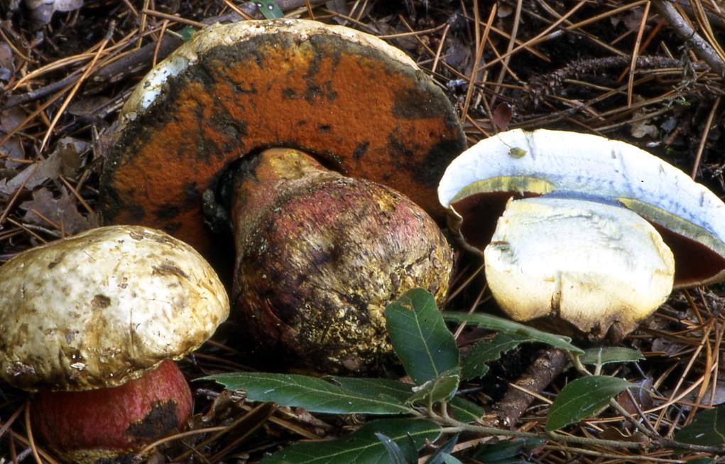 funghi velenosi tragedia in una famiglia di pisa